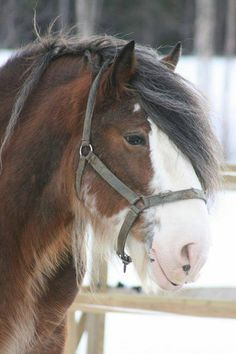 This is the clydesdale Love these horses. Big Horses, Work Horses, Horse Love, All The Pretty Horses, Beautiful Horses, Animals Beautiful, Zebras, Animals And Pets, Cute Animals