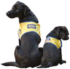 Dream: Raise puppies for Canine Companions for Independence #service #dogs