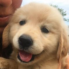 Look at that little face!!!   @ellie_thegoldengirl