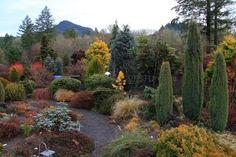 Хвойные в ландшафтном дизайне – оптимальное решение для садовых участков
