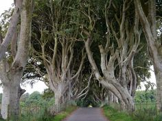 The Dark Hedges – County Antrim, Northern Ireland - Atlas Obscura Hedges, Northern Ireland, The Darkest, Places, Nature, Travel, Naturaleza, Viajes, Northern Ireland County
