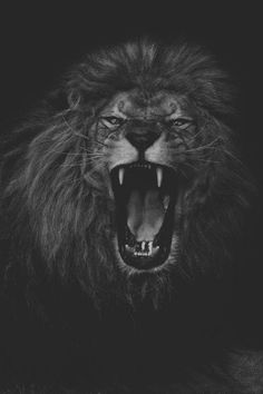 Picture # 3913632892 Black and White Animal Photos Wild Animal Wallpaper, Lion Wallpaper, Dark Wallpaper, Lion Images, Lion Pictures, Lion Sketch, Lion Tattoo Sleeves, Lion Photography, Lion Head Tattoos
