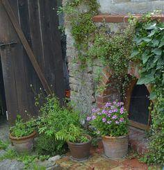 DSC_0007 | by Donauluft Edible Garden, Plants, Vegetable Gardening, Flora, Vegetable Garden, Plant