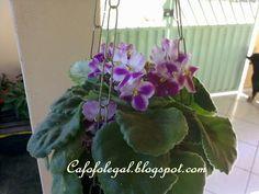 Minhas flores... - Cafofo legal