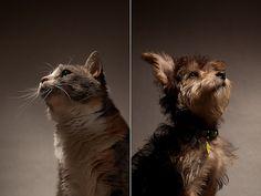 7 alimenti presenti nelle nostre case e pericolosi per cani e gatti http://ambientebio.it/7-alimenti-presenti-nelle-nostre-case-e-pericolosi-per-cani-e-gatti/
