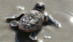Fun Things to Do on Tybee Island with Kids: Learn About Tybee's Sea Turtles