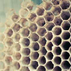 Bee photography, hive photo - 8x8 photograph