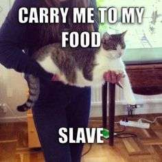Carry me to my food, slave
