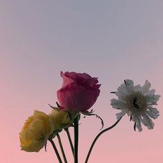 ─ ✿· One With Nature, Flower Aesthetic, Love Flowers, Mother Nature, Dandelion, Flora, Artsy, Garden, Plants