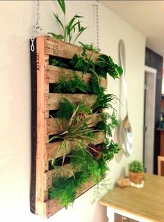 In most regions the herb garden is now dormant, but with a little planning you can grow many culinary herbs indoors this winter. An indoor herb garden is not only functional,… Continue Reading → Vertical Pallet Garden, Herb Garden Pallet, Vertical Planter, Herbs Garden, Wall Herb Garden Indoor, Balcony Garden, Small Herb Gardens, Hanging Herb Gardens, Magic Garden