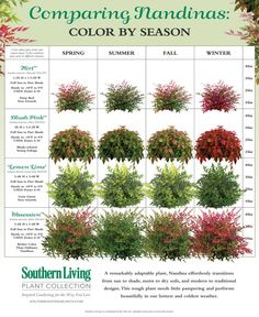 Nandinas come in a variety of forms and colors. Here, we size them up!