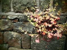 Stone walls and rockeries become perfect homes for seeds which add texture and interest after blooming.