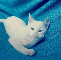 Mandando Beijos  #cats #gatos