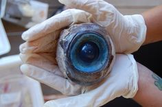 Marine biologists say they've got the owner of a giant eyeball that washed up on a Florida beach narrowed down to two possibilities - a swordfish or a giant squid. Florida wildlife officials are still investigating. Florida Fish, Florida Beaches, South Florida, Florida Coastline, Florida Living, Mysterious Sea Creatures, Mysterious Things, Unusual Things, Strange Things