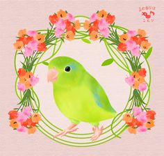 Pacific Parrotlet FACEBOOK PAGE https://www.facebook.com/mamelurihakotori Thank you for seeing. Like us on Facebook now!