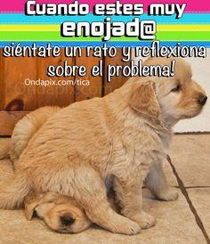 Cuando estes muy enojado sientate a  pensar #animales #perros