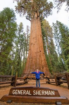 What a view! Gazing up at the General Sherman Tree, the largest tree in the world!