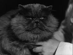 The most beatiful cat [video] (Repozytorium Cyfrowe Filmoteki Narodowej) #cat