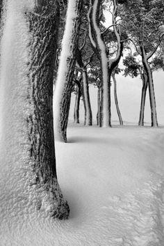 ♂ snow forest winter tree mono textures by Richard Boak (stuck on the rock) Winter Szenen, I Love Winter, Winter Magic, Winter Is Coming, Winter White, Winter Season, Winter Trees, Snowy Trees, Winter Picture