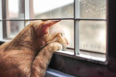 The sight of your pet after a long and tiring day is bliss. The few minutes that you spend playing, cuddling them can give you a whirlwind of energy. And similarly, seeing their owners return home after a long day of cat napping and chasing imaginary mice is also the most exciting part of the […] The post 5 Tips To Help Your Cat With Separation Anxiety appeared first on The Catington Post. Sweet Baby Names, Cat Window, Funny Cute Cats, Cat Boarding, Feeling Lonely, Fluffy Animals, Hogwarts Mystery, American Gods, Penny Dreadful