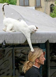 Funny Cat Teasing A Man - Funny Pictures