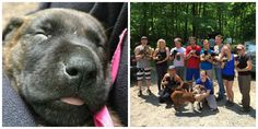 These Heroic Campers Saved a Litter of Puppies from a Hot Van   - CountryLiving.com