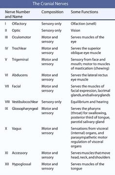 cranial nerves mnemonic cranial nerve 8 vestibulocochlear the vestibulocochlear nerve is Cranial Nerve 8, 12 Cranial Nerves Mnemonic, Nursing School Notes, Nursing Schools, Medical Terminology, Nursing Tips, Ob Nursing, Anatomy And Physiology, Nursing Students