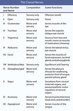 Cranial+Nerves | Rishabh Tiwari's Blog: Cranial Nerves Mnemonic