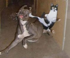 Fighting ;)
