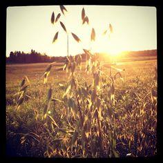 Light is beautiful in autumn. Countryside @ Finland. via Kuu yrttitarhassa