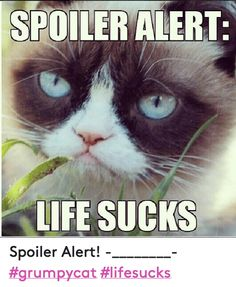 Image result for grumpy cat spoiler