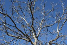 branches photo - Cerca con Google