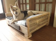 50 DIY Ideas for Wood Pallet Dog Beds: We all love our dogs as we love our family members. So, here we have some amazing pallet wood dog bed ideas to make your Wood Dog Bed, Pallet Dog Beds, Diy Pallet Bed, Pallet Crafts, Pallet Wood, Barn Wood, Wood Pallets Projects, Pallet Gate, Wood Beds