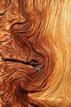 previews.123rf.com images pancaketom pancaketom1108 pancaketom110800014 10418865-contorted-brown-and-tan-wood-grain-from-alpine-pine-tree-roots-Stock-Photo.jpg