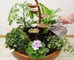 Zimmerbrunnen bepflanzen und Wasser auffüllen.