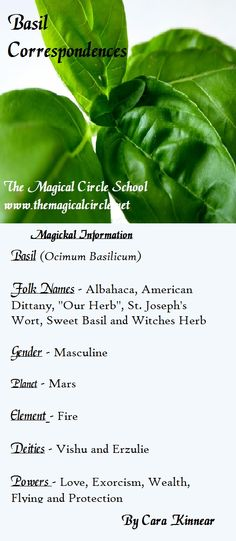 The correspondences of basil. The Magical Circle School www.themagicalcircle.net