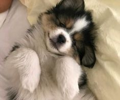 Image about cute in dogs by maria leonidou on We Heart It Cute Puppies, Cute Dogs, Dogs And Puppies, Doggies, I Love Dogs, Puppy Love, Pets 3, Cute Little Animals, Cute Creatures