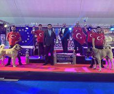 Türk Çoban Köpeği KANGAL Dünya Şampiyonu AVKIF | AVKIF Coban, Marines, Dogs, Fictional Characters, Fantasy Characters, Pet Dogs, Dog, Doggies