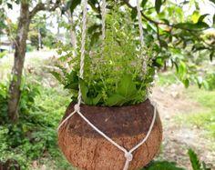 Cache pot noix de coco