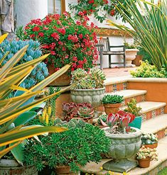 When combining several plants in one vessel, a good rule of thumb is to group three types: tall, bushy, and cascading. This guarantees a garden in every pot.     Here, ceramic tiles embellish the risers of these garden steps, but it's the potted plants that introduce living color. Arranged off to one side to keep the way clear, the geraniums and succulents are quickly and easily moved whenever the weather or the traffic pattern changes.