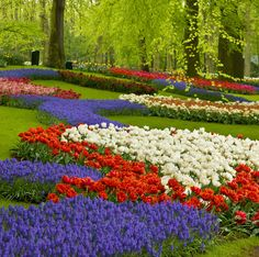 The Most Beautiful Gardens In The World – Keukenhof Garden in Amsterdam Colorful Flowers, Spring Flowers, Holland Garden, Amsterdam, Amazing Places On Earth, Beautiful Flowers Pictures, Tulip Festival, Most Beautiful Gardens, Beaux Villages