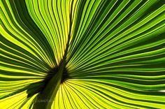 Green - Pinned by Mak Khalaf Nature abstractcloseupgreenmirandanaturalpalmplant by mmiranda1