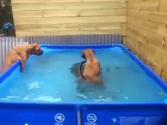 Dogs working together to get a tire out of the pool #cute #aww RePin if you liked this!