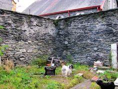 Before - 2012. The original excercise yard, well where do we begin Ceba dog?