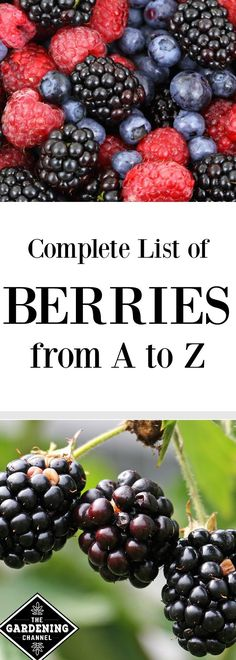 Complete list of berries from A to Z. Looking for berries to grow in your garden?