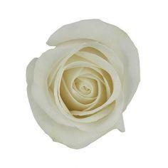 Ivory White Rose Vendela Wholesale Wedding Flowers