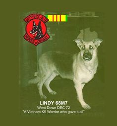 I was Lindy's handler in Vietnam from 1972 -1973. Lindy (68M7) never came home - and here is the story: December 2013 was 41 years since I walked my K9 partner LINDY (68M7) to his death. As the war...