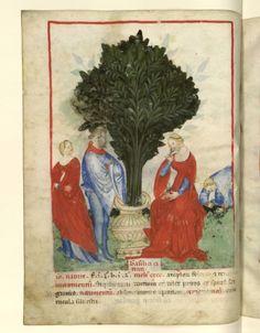 Nouvelle acquisition latine 1673, fol. 22v, Récolte du basilic. Tacuinum sanitatis, Milano or Pavie (Italy), 1390-1400.