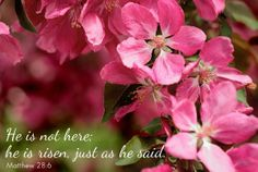 ❥ He is not here, He is risen, just as he said.