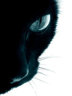 Cat Perspective by Lara Jade